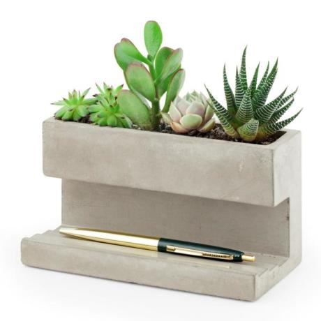 A desk concrete planter with cacti and succulents that need little looking after
